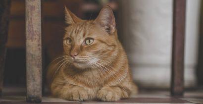 Diarreia em gatos? Saiba ajudar bichanos com problemas intestinais!