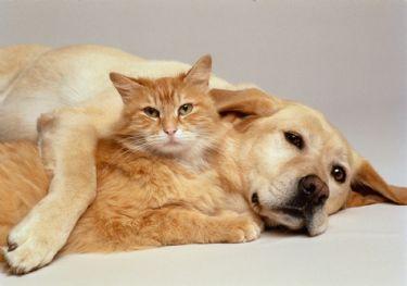 Anestesia Pet